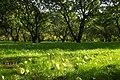 Яблоневый сад в Коломенском.jpg