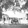 כפר תבור, הגליל התחתון-ZKlugerPhotos-00132nt-0907170685133bc8.jpg