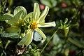 عکس از گلها و گیاهان باغ بوتانیکال تفلیس - گرجستان 47.jpg