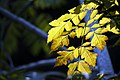 گیاهان در پاییز - باغ بوتانیکال تفلیس 05.jpg