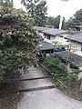 ถนนหอพักพยาบาลหญิง โรงพยาบาลพะเยา - panoramio.jpg