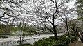 井の頭公園 - panoramio (66).jpg