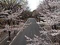 平尾小通り(歩道橋の上)-2013 - panoramio.jpg