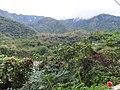 新生村賞梅步道 Xinsheng Village Plum Trail - panoramio.jpg