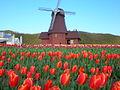 春の色Ⅰ(Tulip Park) - panoramio.jpg