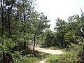 树林 - panoramio (2).jpg