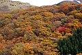瀬の本高原の紅葉 - panoramio.jpg