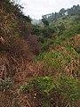 登云登山道 - Dengyun Mountain Trail - 2014.11 - panoramio.jpg