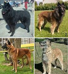 OBSOLETE GERMAN CUSTOMS DRUG DOG HANDLERS PATCH.