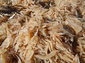 09877jfFields Wawa Shrimps Fish Beaches Orion Bataanfvf 15.JPG