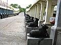 1008 SHIVA TEMPLE, KAILAYA SIVALAYAM, Kanchamalai, Salem - panoramio (13).jpg
