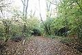 1066 Country Walk in Strumblet's Wood - geograph.org.uk - 1577110.jpg