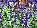 1296 - Zell am See - Flowers.JPG