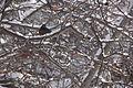13-02-09 Nemo Snowstorm (Unedited) (88) (8466153661).jpg