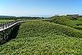 140829 At Shiretoko Goko Lakes Hokkaido Japan13s3.jpg