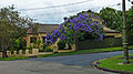 14 Woodside Avenue, Lindfield, New South Wales (2010-12-04).jpg