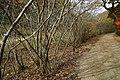 171125 Kobe Municipal Forest Botanical Garden03s3.jpg