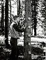 1958. R.G. Mitchell making Chermes population counts with sling-attached microscope. Willamette Pass, Oregon. (33207077100).jpg