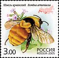 2005. Марка России stamp hi12612324614b2ce14dca1a2.jpg