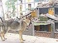 2008년 중앙119구조단 중국 쓰촨성 대지진 국제 출동(四川省 大地震, 사천성 대지진) SSL26844.JPG