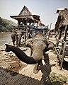 20100227 chiang rai3 elephant boat 7008 (4444146953).jpg