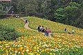 2014-04-04 石象湖 郁金香 liuzusai - panoramio (88).jpg