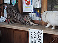 2014SpringKyoto (14232236753).jpg