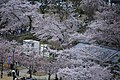 20160403 Himeji-Castle 3365 (26221359213).jpg