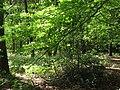 2018-05-14 Woodland footpath, Northrepps.JPG