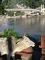 2843- Cows everywhere (57704229).jpg
