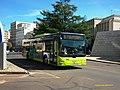 362 Tubasa - Flickr - antoniovera1.jpg