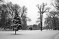 9002vik Park w Pszczynie . Foto Barbara Maliszewska.jpg