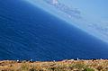 Açores 2010-07-18 (5018763462).jpg
