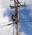 AELnP Lineman Power Co 395.jpg