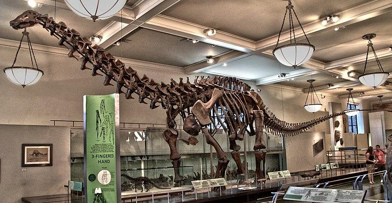 File:AMNH Apatosaurus.jpg