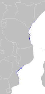 An ecoregion of mangrove swamps along the Indian Ocean coast of East Africa in Mozambique, Tanzania, Kenya and southern Somalia