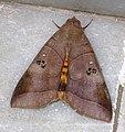 A Moth on marble floor.jpg