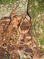 A frog near a stone3.JPG