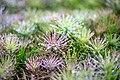 A little pine.jpg