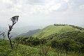 A scene from Siroy National Park, Manipur (1).jpg