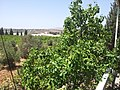 A side view from my house - panoramio.jpg