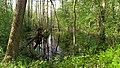 "A swampy lake from one side of the ecological path ""Lisnyky"" - Озерцо с одной стороны экологической тропинки ""Лесники"" - panoramio.jpg"