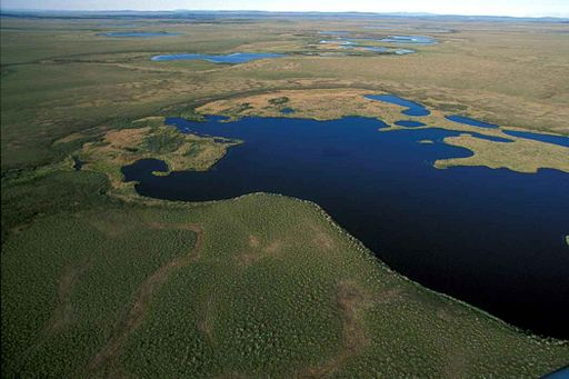 Aerial-view-of-national-park-wetlands