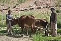 Afghan farmers in Bamyan-3.jpg