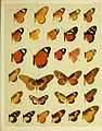 African mimetic butterflies (19556049896).jpg