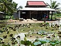 After the Flooding - Kampot - Cambodia - 06 (48520206536).jpg