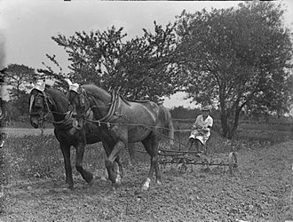Women's Land Army - Working on a potato crop during World War I