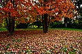 Alberi in autunno (30491736560).jpg