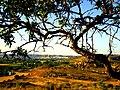 Alcañiz - panoramio.jpg