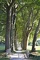 Allée de platanes, Naurouze (1).jpg